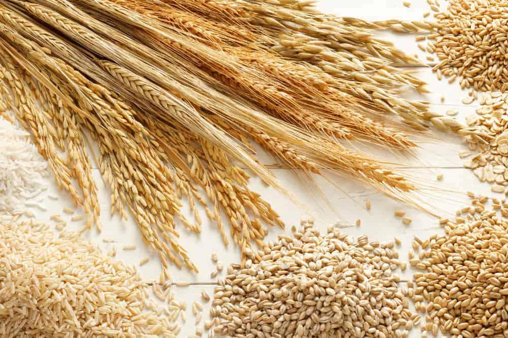Getreide Körner und Ähren auf einem Tisch